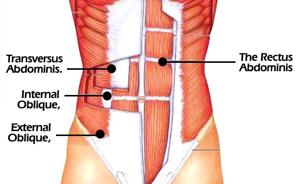 Abs muscle