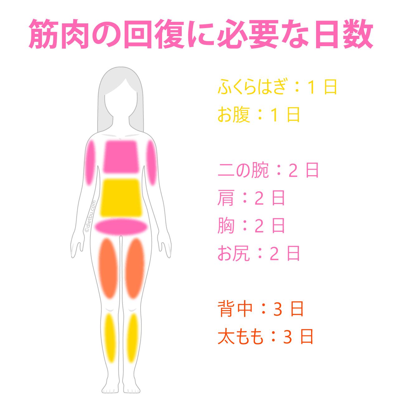 筋肉の回復に必要な日数